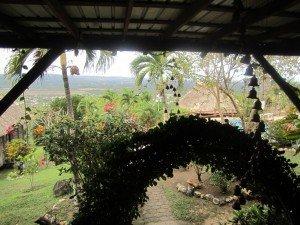 005-flores-san-ignacio-19-12-2012-300x225